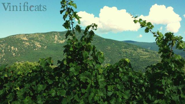 vinya i cel